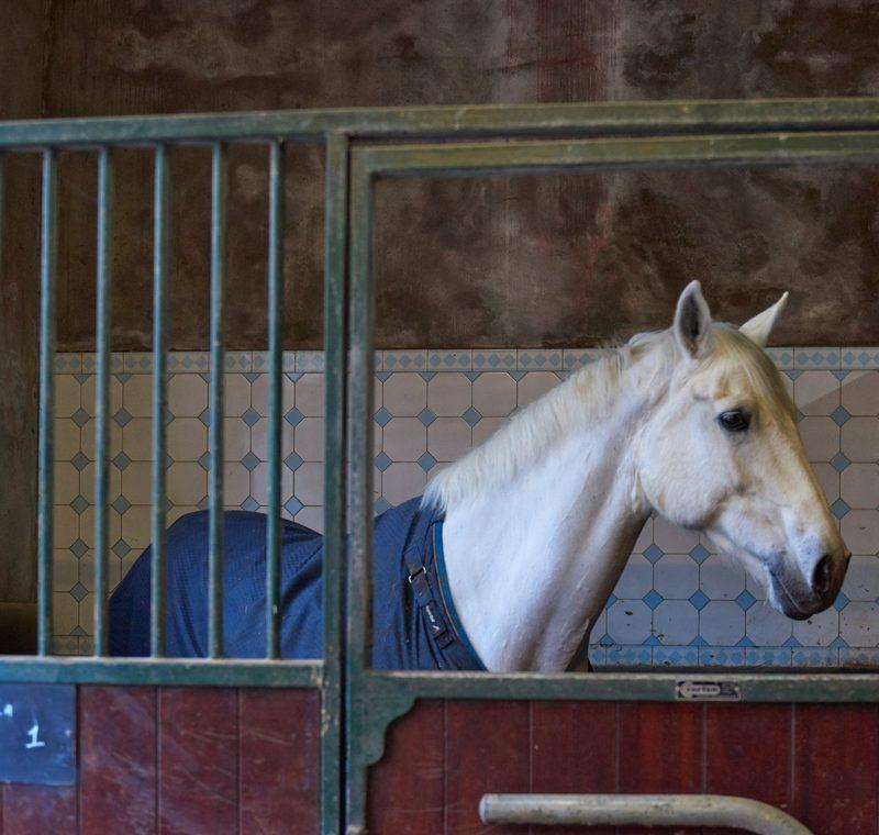 Paardenhuur - Paard huren Amsterdam
